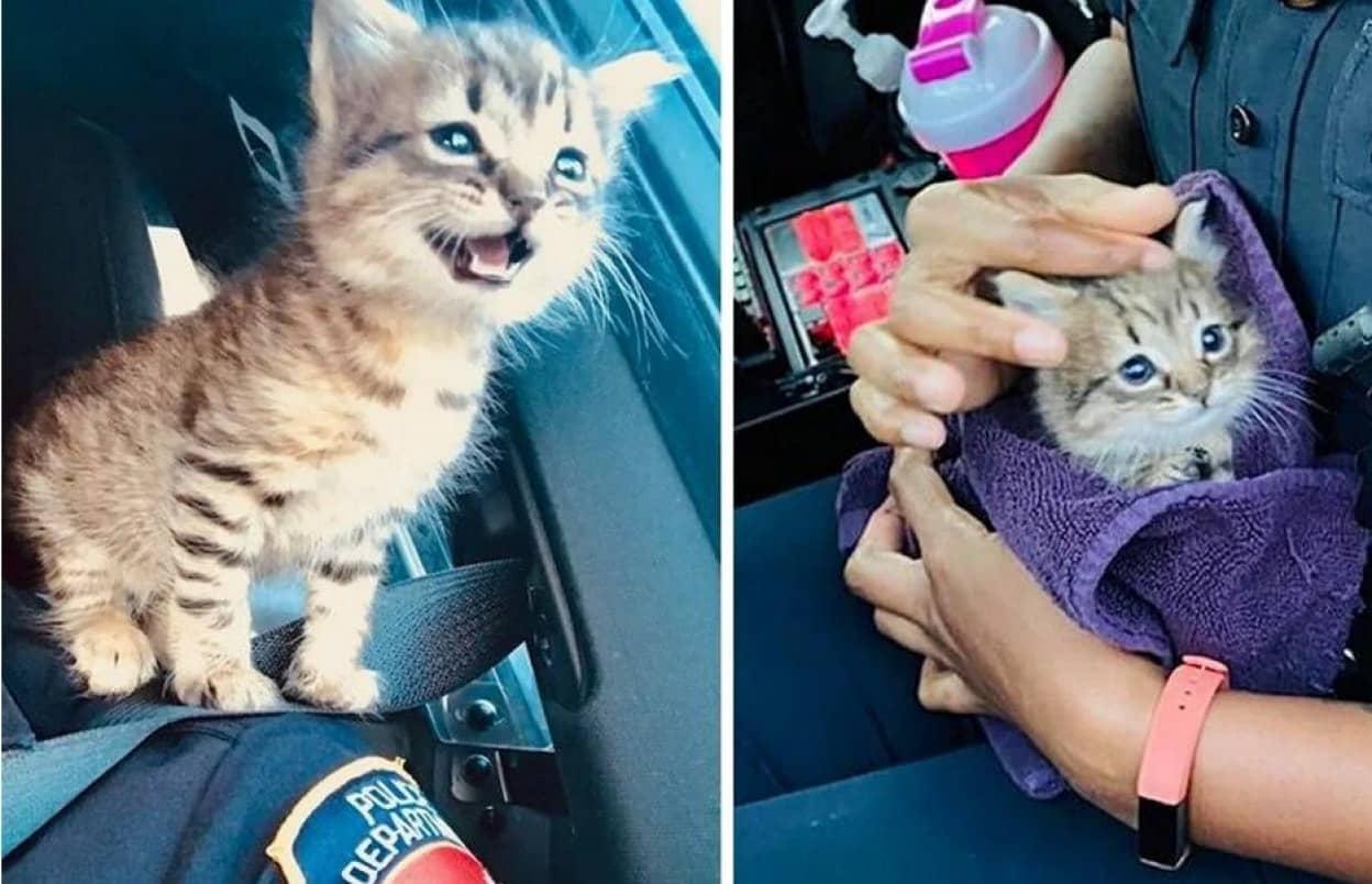警官の心と肩をつかんでそのまま家族になった子猫