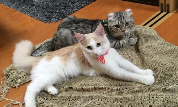 科学的に証明されている、猫を飼うことの10のメリット