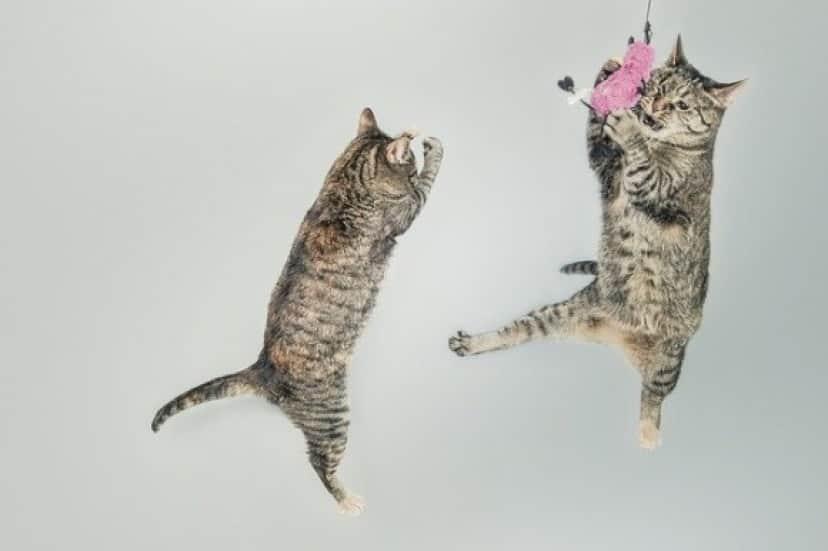 cats-558077_640_e
