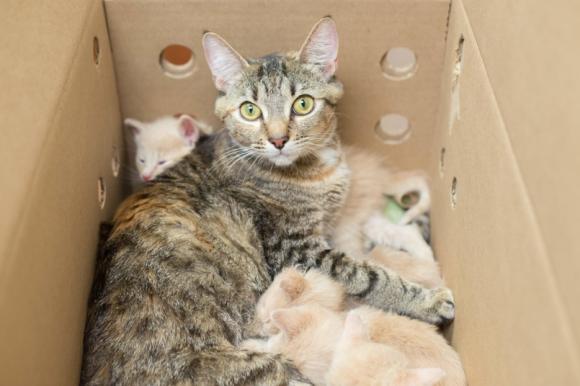 全部私が面倒見ますから!血のつながりのない子も含め14匹の子猫たちをたった1匹で世話をするメス猫(アメリカ)