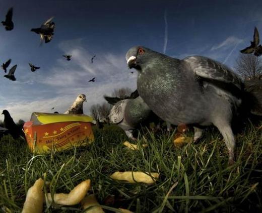 pigeons-in-peckham_3