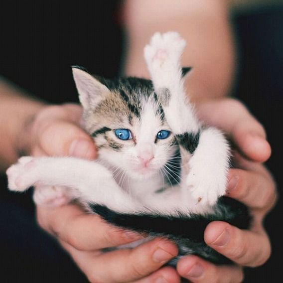 the_smallest_pets_640_13
