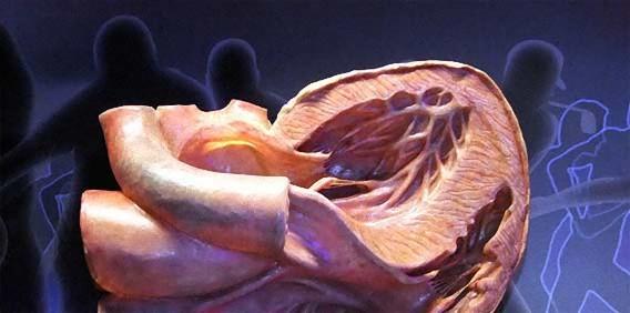 巨人に食べられた気分を味わえる?進撃の巨人的人体空間を堪能できるオランダ「コルプス博物館」