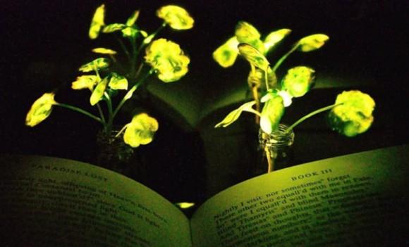 植物を光源に。暗闇で光る植物を作り出す研究が進められている(米研究)