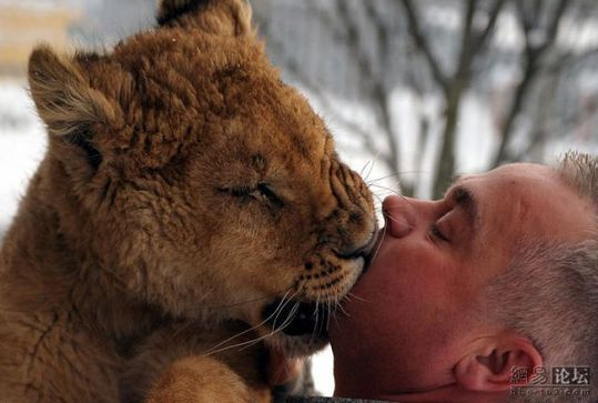 lion_and_man_04