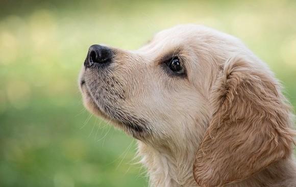 犬の鼻は熱も感知できることが判明(スウェーデン・ハンガリー共同研究)