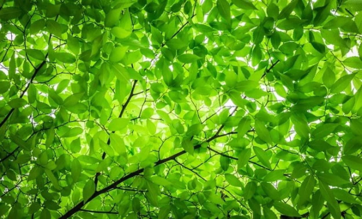 wood-2249363_640_e