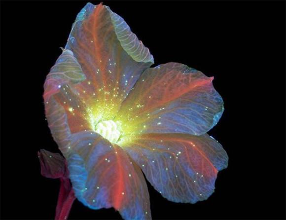 複眼に映る花々はこんなにも美しくて神秘的!不可視光を見る昆虫たちの独特の視覚を再現