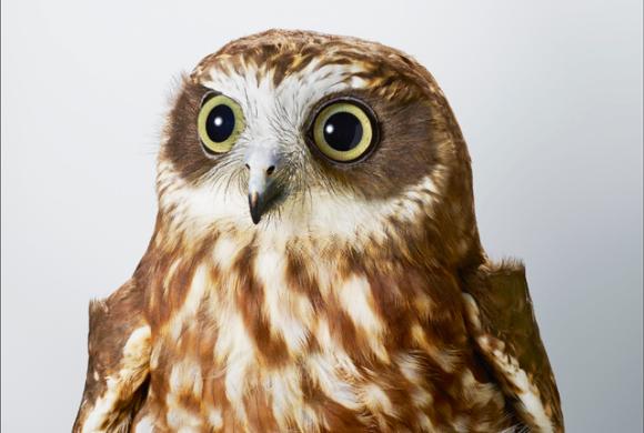 傷つき、巣から落ちて育児放棄された鳥たちが凛々しく育った姿を撮影したポートレート