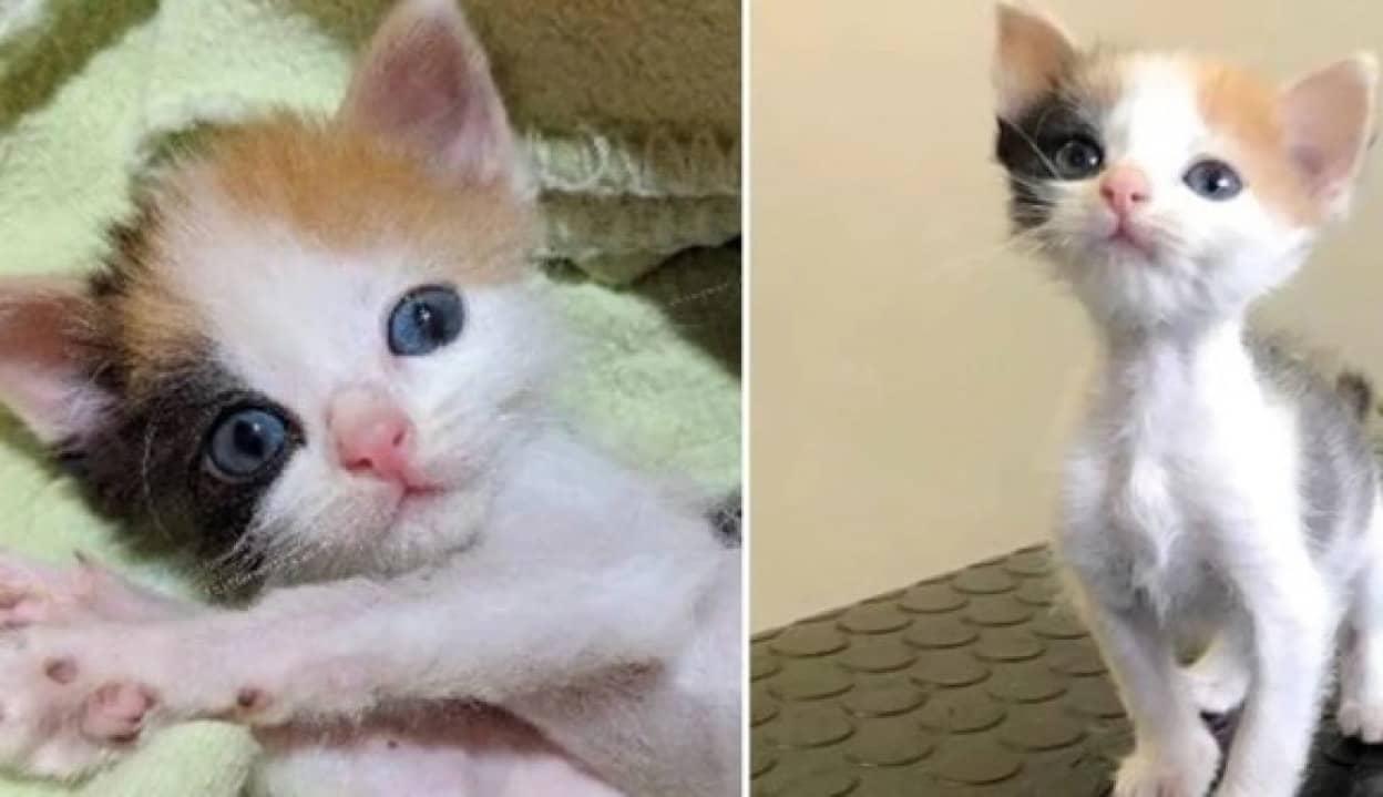生きているのが不思議なぐらいボロボロだった子猫が美しい三毛猫になるまでの物語