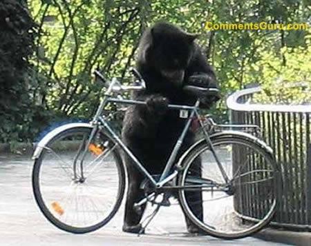 a97299_g187_6-bear-boke