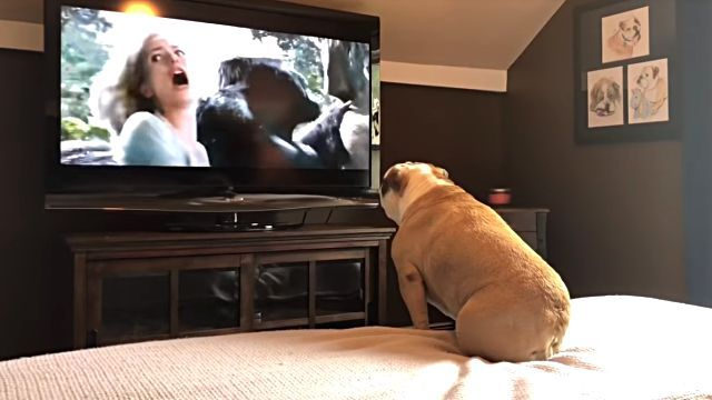 bulldogsreaction0