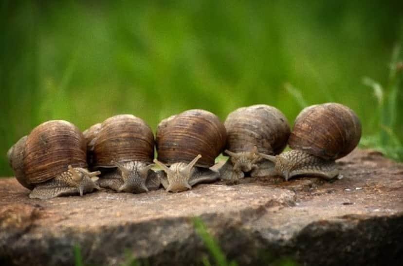 snail-2983235_640_e_e