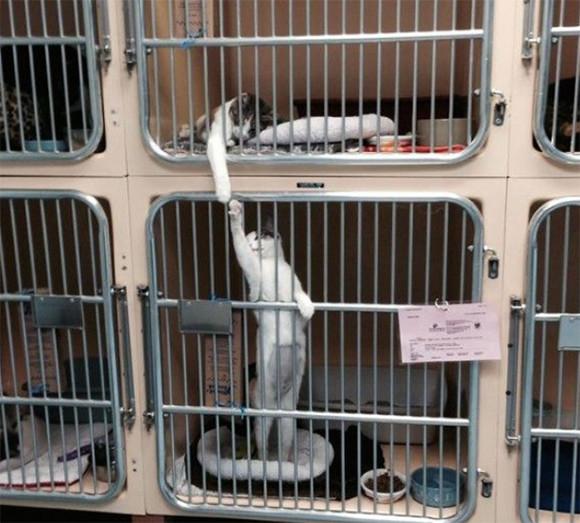 保護施設で里親を待っている間、犬や猫たちは何をしているんだろう?施設スタッフなどが撮影した動物たちの写真