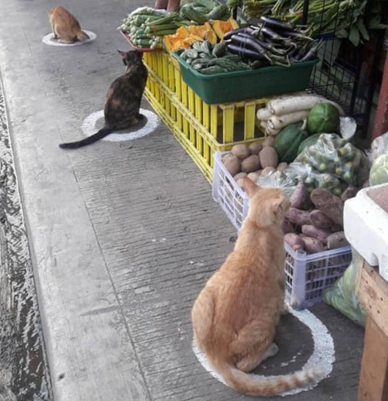 猫転送装置と化した社会的距離マーク