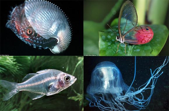 透けて見えるぜ!透明になって身を守る、トランスルーセントな生き物たち