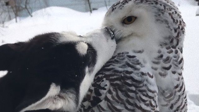 犬と白フクロウ