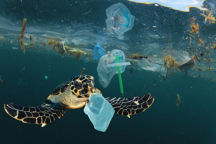 テイクアウト用の使い捨て容器が、海岸に漂着するゴミの88%を占めていた