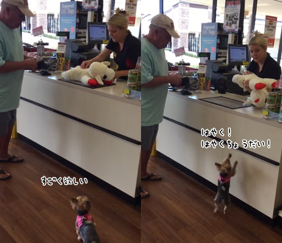 こうてもろた。ぬいぐるみを買ってもらって大喜びの犬。自分より大きいぬいぐるみを車まで持ち運ぶ