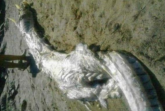 これが伝説のドラゴンか?スペインの海岸に体長約4メートル、角のある巨大生物の死骸が打ち上げられる