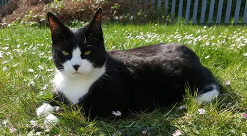 felix-the-lrd-cat_e