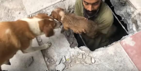 下水道に迷い込んだ子犬5匹を10時間かけて救出。母犬はその場で見守り続け、人間に感謝の気持ちを表す