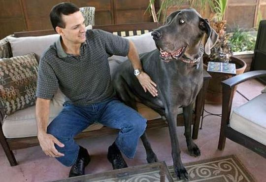 Worlds_Tallest_Dog_12
