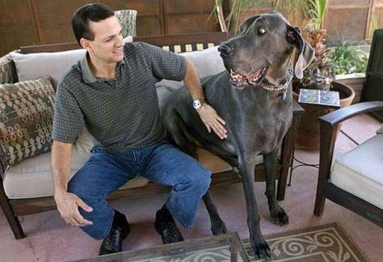 Worlds_Tallest_Dog_12