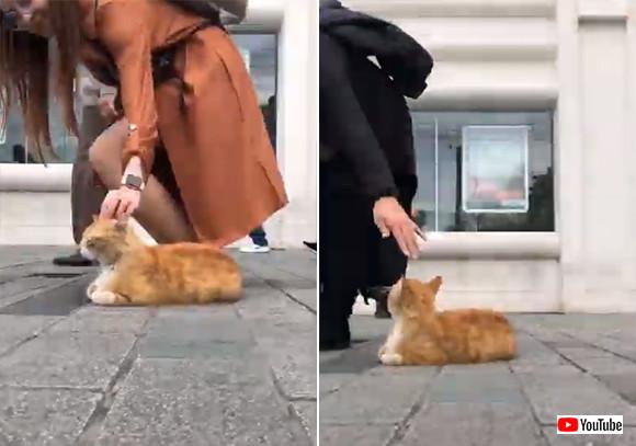 トルコはやっぱ猫の国。イスタンブールの歩道に鎮座する猫と通行人たちの様子を早回しで