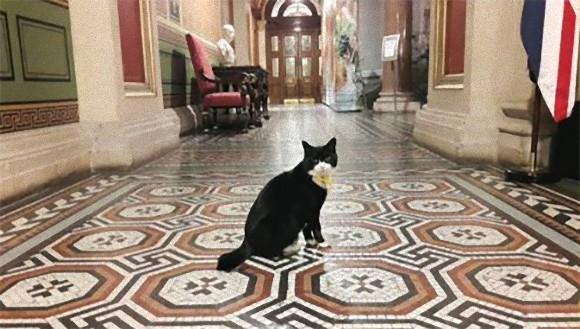 フランスでも官邸に猫2匹をネズミ捕獲長として正式雇用。その他猫が公職についている国家