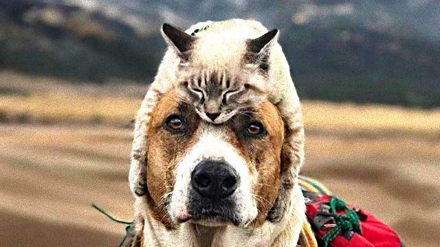 種族の違いも何のその。犬と猫のらぶらぶな関係を詰め合わせでお届け