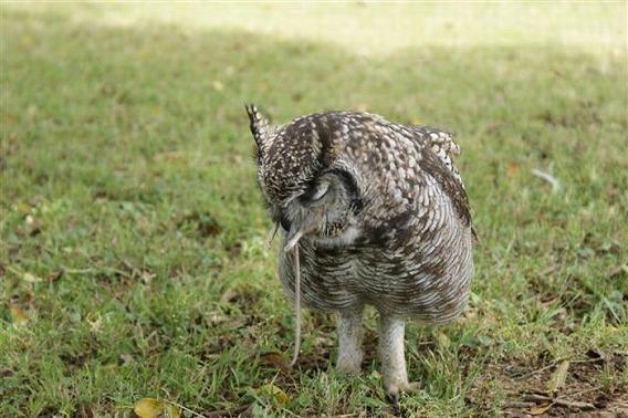 caring_owl_20