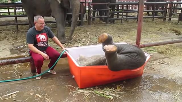 よろよろポテン!象の赤ちゃんの水遊びがかわいい