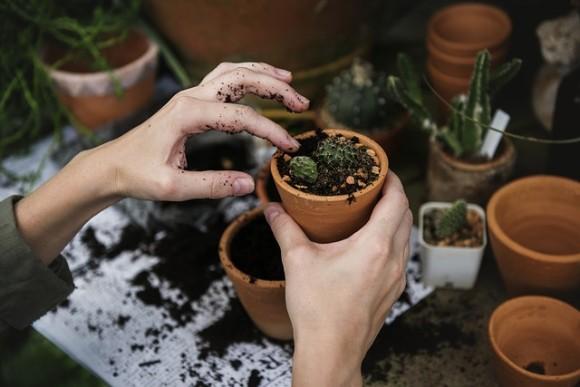 plant7_e