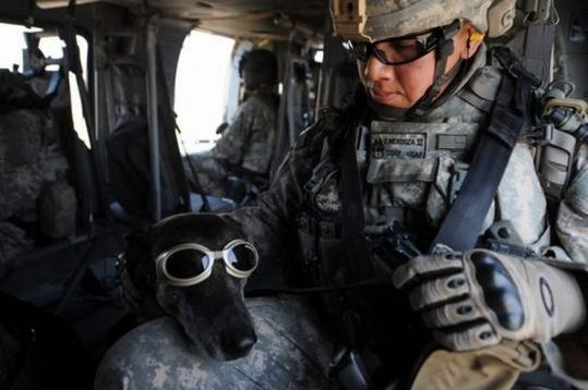 dogs_in_army_10