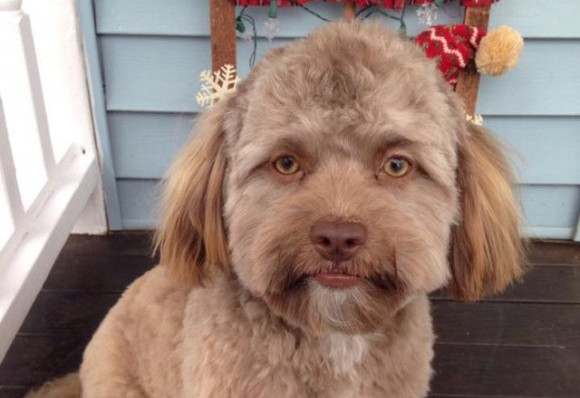 追いかけてハイブリッド。新たなる人面犬の存在が確認される。あまりの人面っぷりにコラ疑惑も浮上したがガチでした。