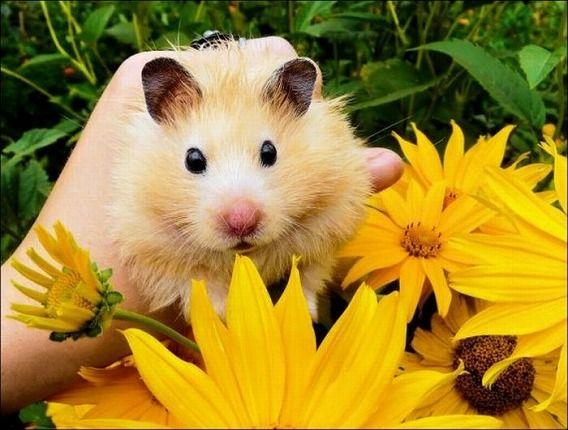 hamsters_01