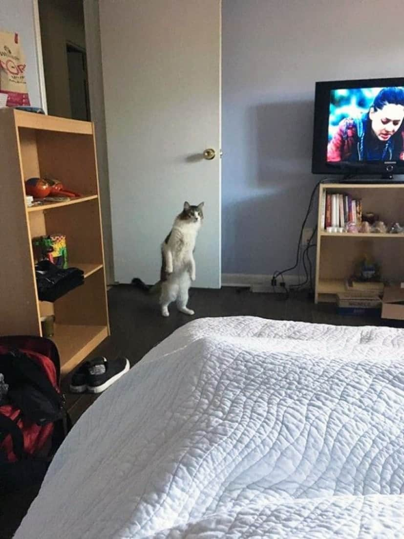 standing-cats16_e