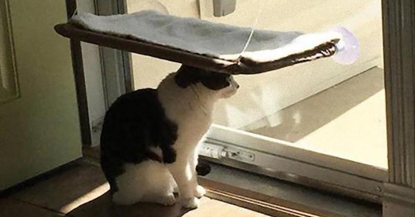 げせない。だがそれが猫という生き物。人間には理解不能な猫ロジックを確認してみよう