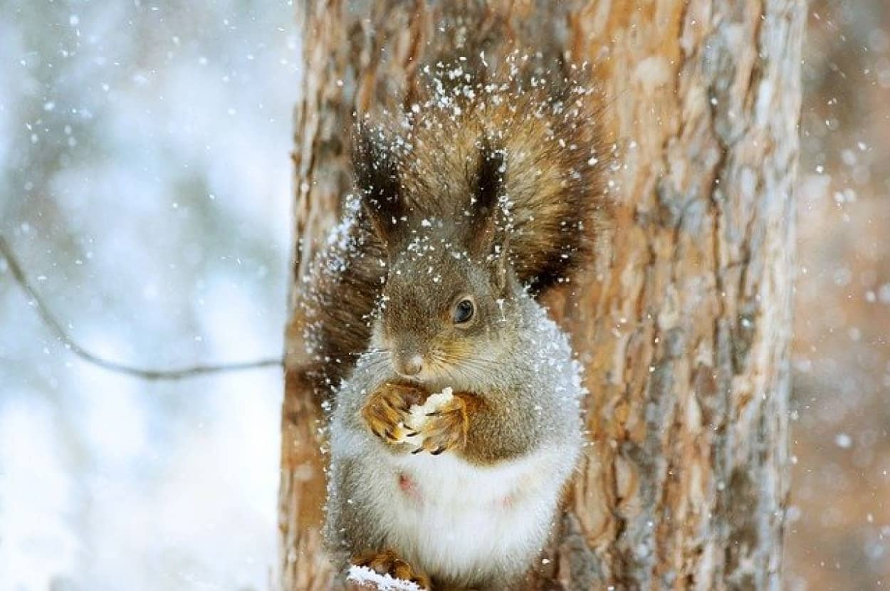 squirrel-4700919_640