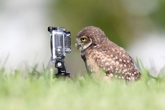 はいはい、カメラカメラっと。カメラに慣れきってしまった動物たちの面白画像特集