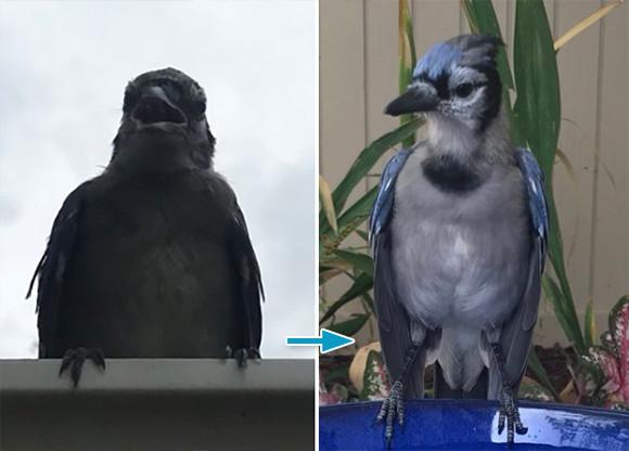 ある日突然やってきた薄汚れた鳥は、美しい青い鳥だった。男性と鳥の友情物語(アメリカ)