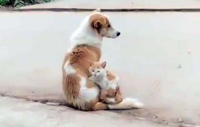 同じ毛色の犬と猫。猫が液体となり、溶けて流れてひとつになった!?
