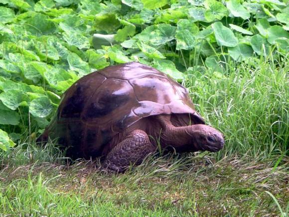 World's_Oldest_Reptile_e
