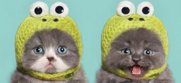 仕事中に猫の動画を見てもOK!ポジティブな注意散漫は生産性が落ちないことが判明(米研究)