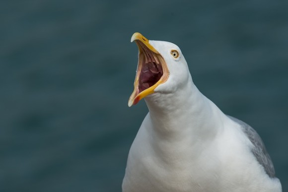 gull-2166711_640_e