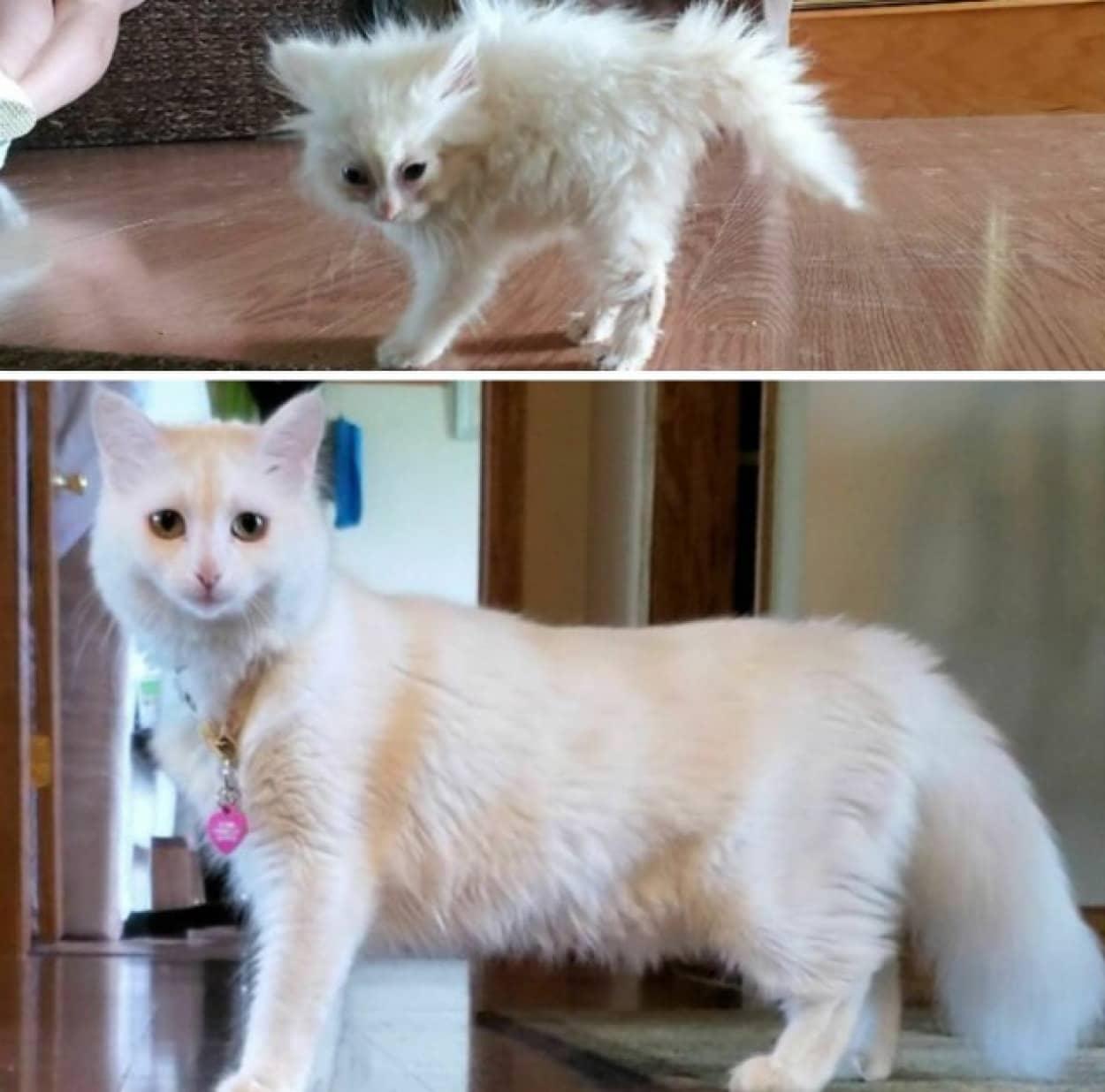 猫の成長ビフォア・アフター
