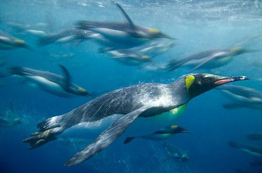 penguins_08