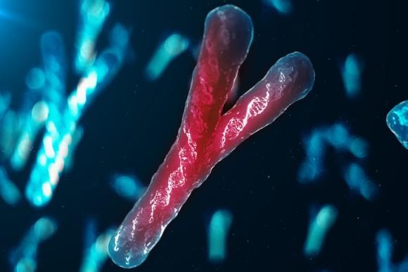 消えつつあるY染色体——男性はいったいどうなってしまうのか?