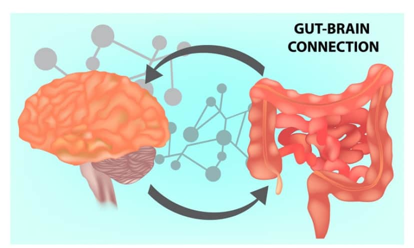 腸と脳の関係